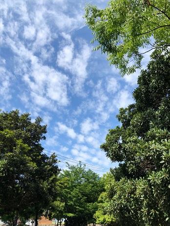 青空散歩19.5.24.jpg