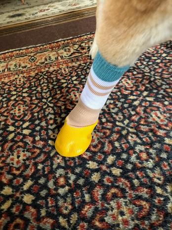 靴下19.5.18.jpg